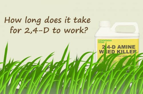 How long does it take for 2,4-D to work?