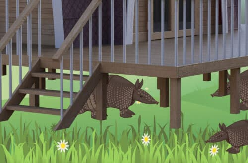 How to get rid of armadillos under the deck?