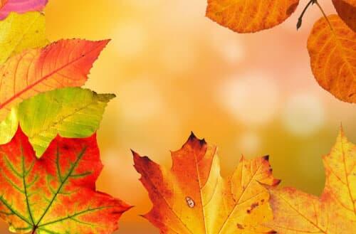Leaf filter vs leaf guard