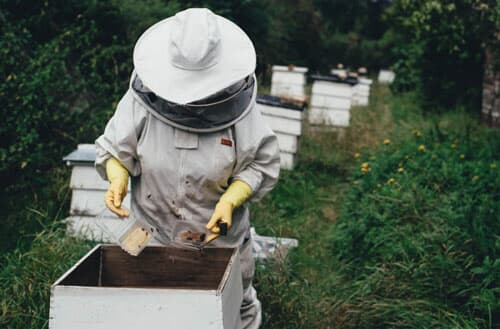 Can I have a beehive in my backyard?
