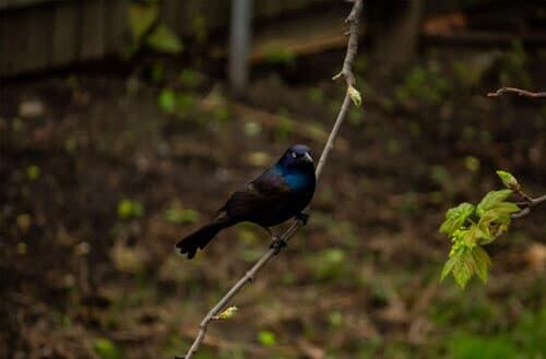 Can I shoot birds in my backyard?
