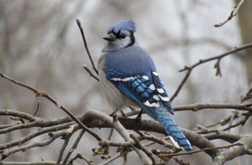 How to catch a wild bird in my backyard?