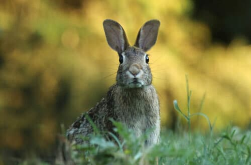 How to bunny proof your backyard?