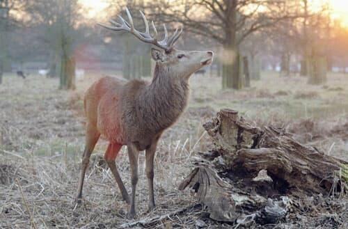 Can I hunt deer in my backyard?