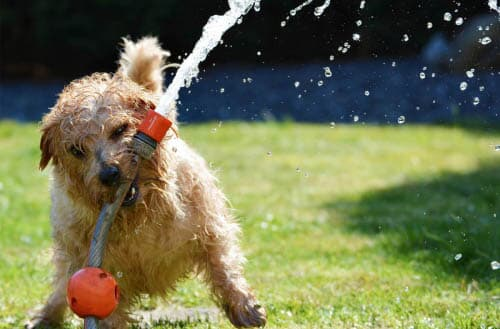 Is it safe to drink from a garden hose?