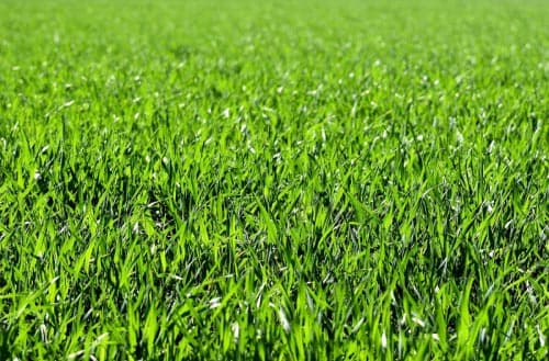 Can grass seed go bad?