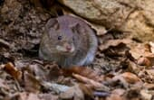 How to get rid of mice in the backyard?