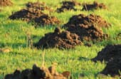 How to get rid of moles in your backyard and garden