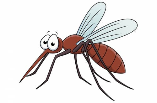 Can mosquitoes see in the dark?