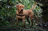 How to fix a muddy backyard dog trail?
