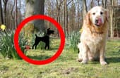 How to keep a dog from pooping in your yard?