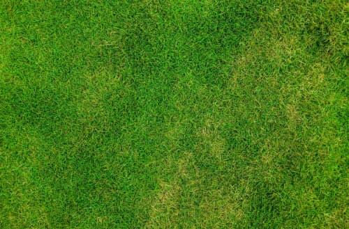 How to fix an over fertilized lawn?
