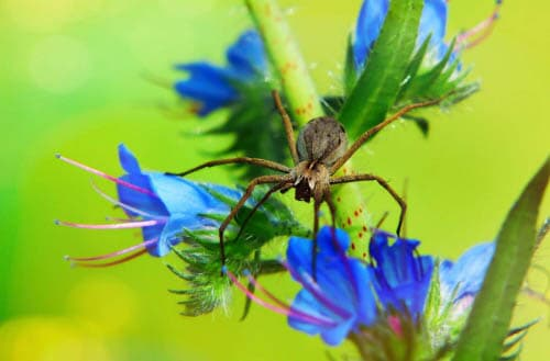 Plants that keep spiders away