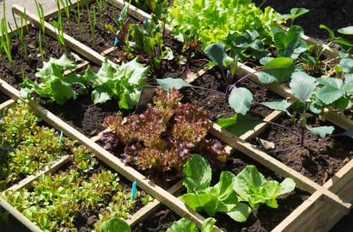 Square Foot Gardening - Ultimate guide